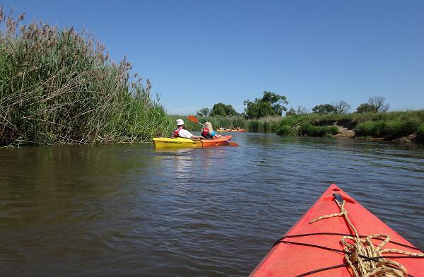 Czerwcowy spływ kajakowy rzeką Pilicą na odcinku Maluszyn-Krzętów