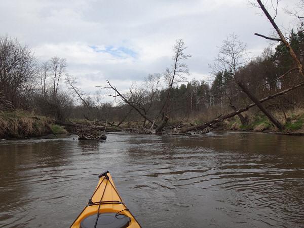 Wiosenny spływ kajakowy rzeką Pilicą na odcinku Tęgobórz-Przyłęk